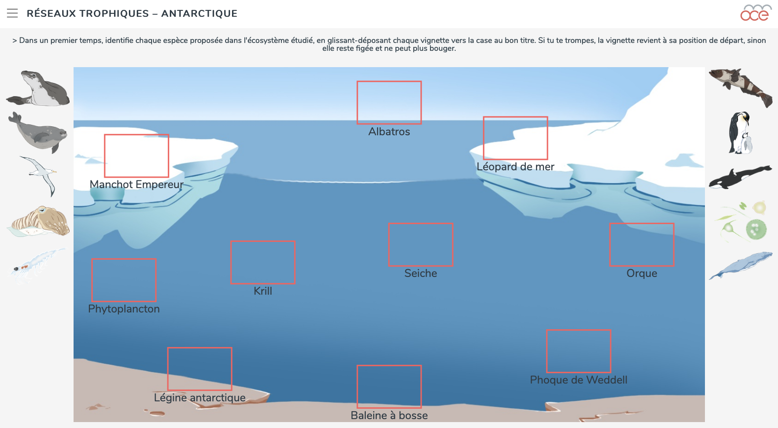 antarctic food webs image