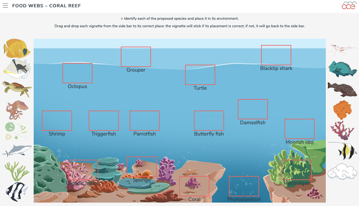 coral reef food webs image