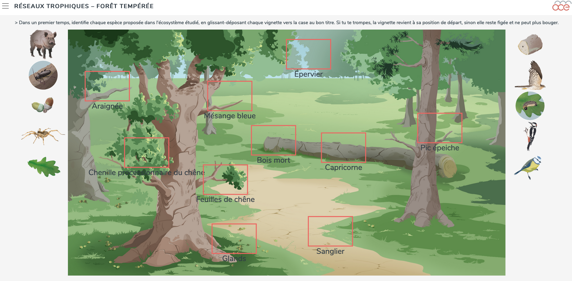 forest food web image
