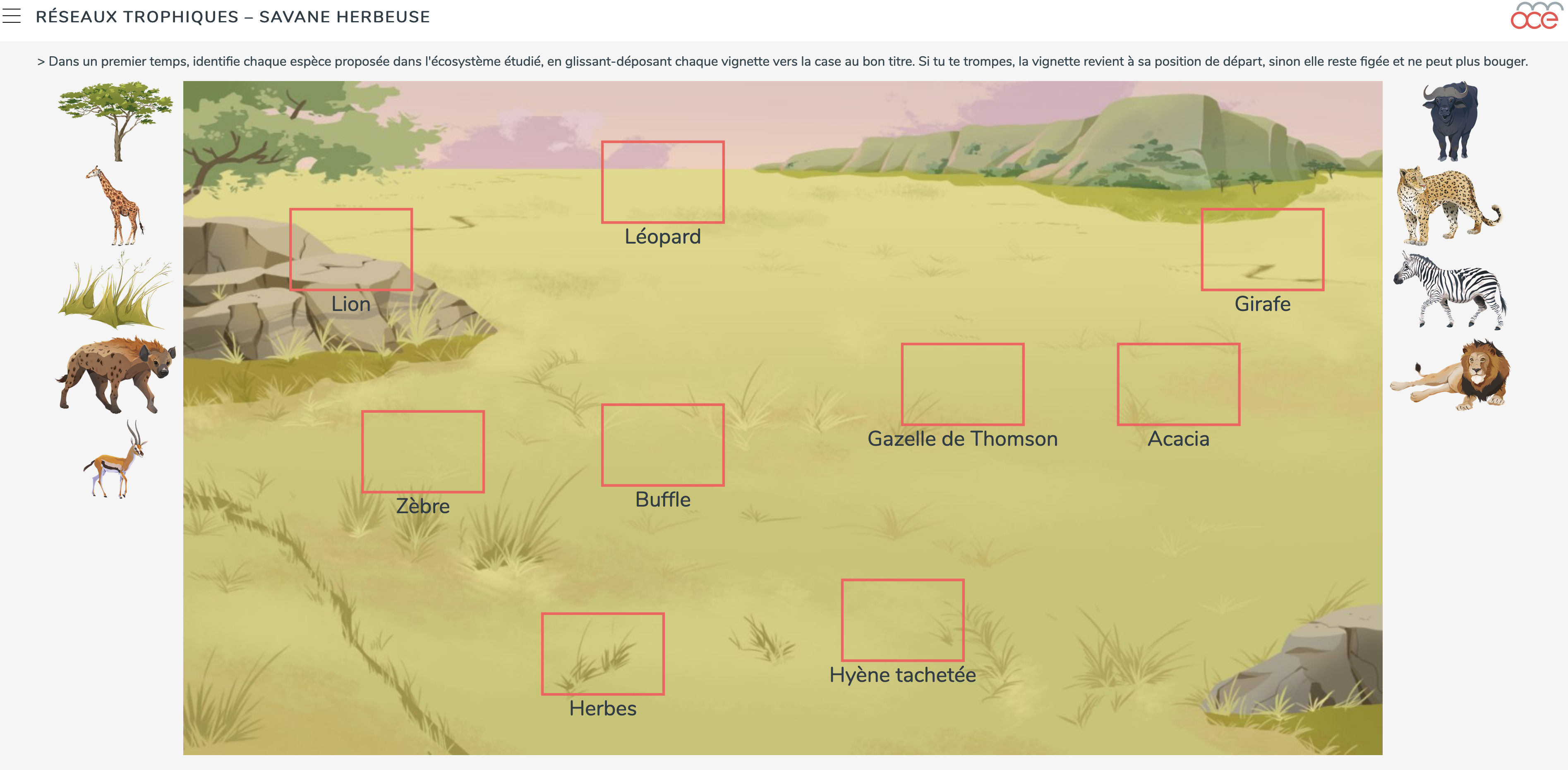 savane food web image