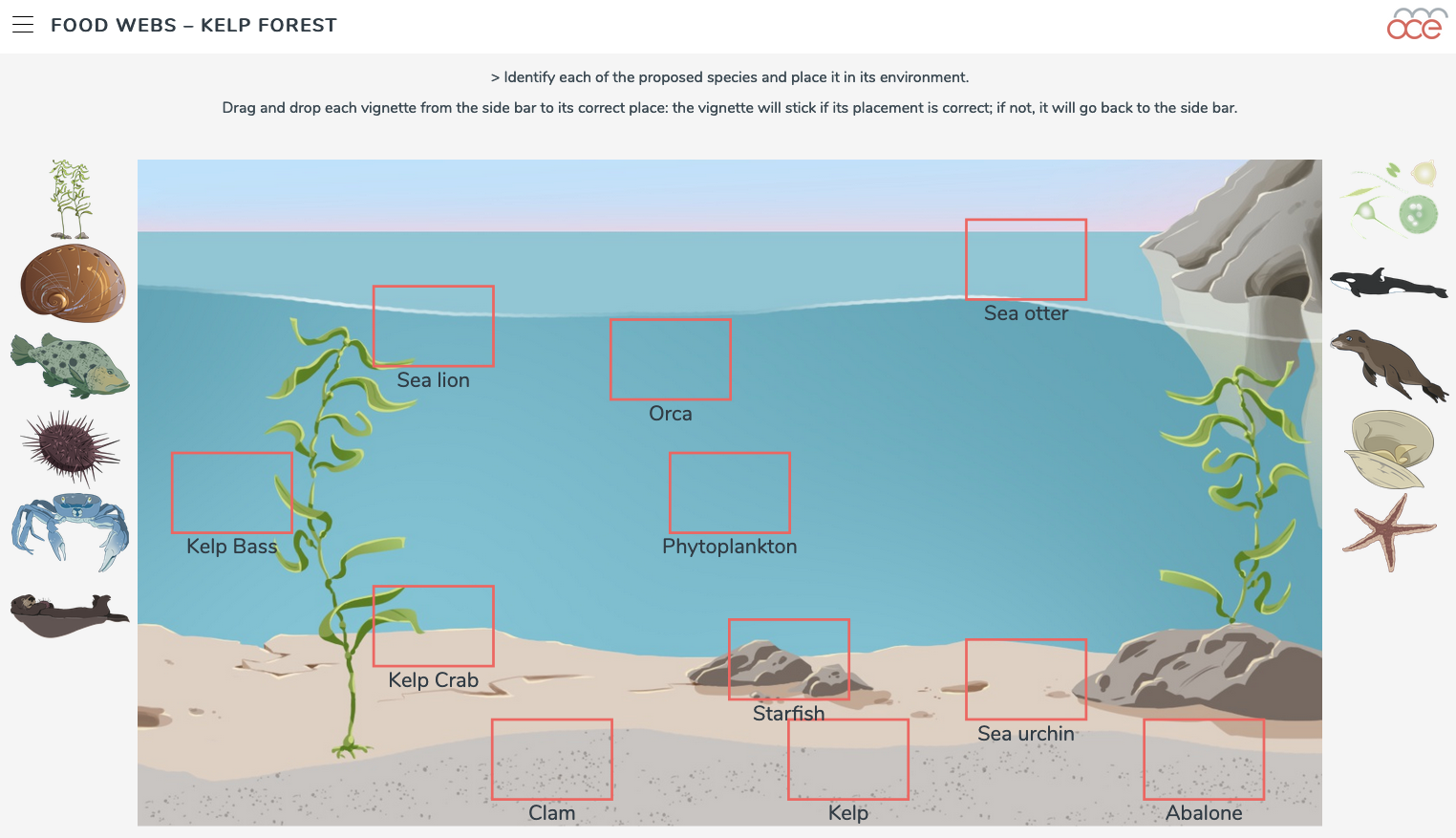 kelp forest food webs image