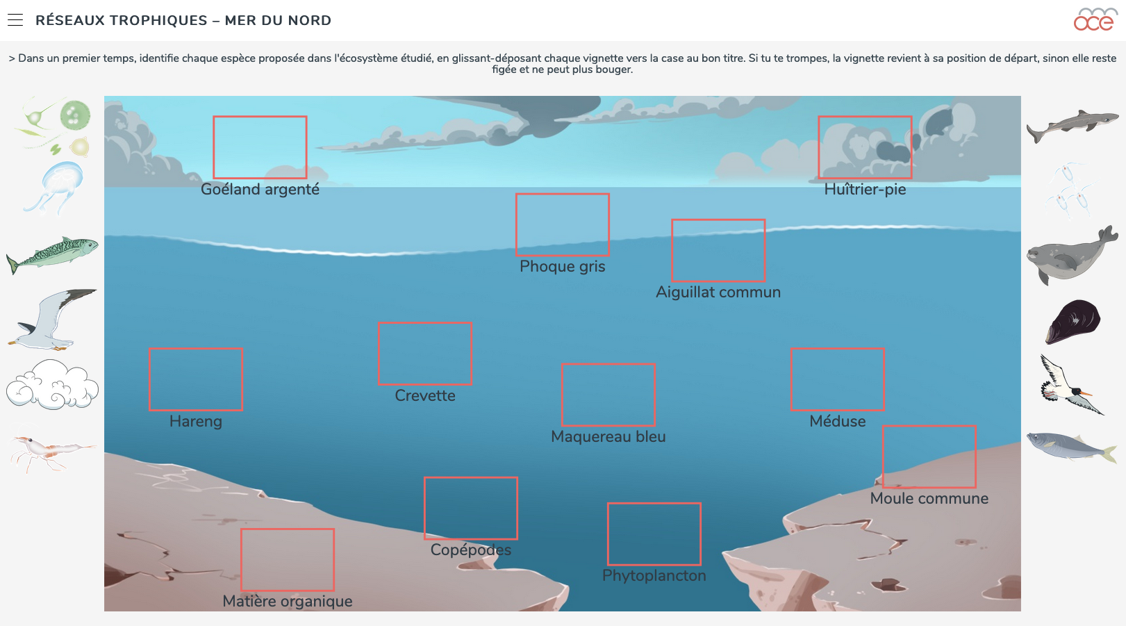 north sea food webs image