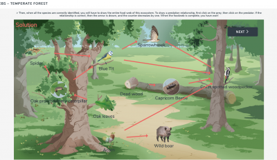 Land food web